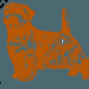 "9e symposium "" WOLF VERSUS HOND"".  14 oktober 2017"